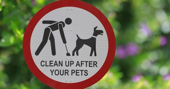 Dog Mess and Irresponsible Owners