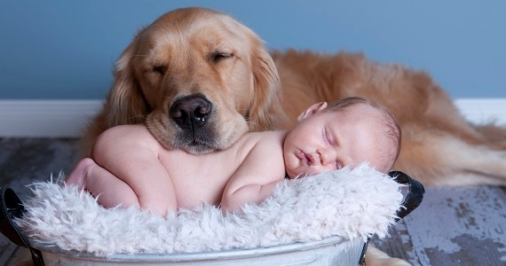 A Guide on Dogs and Babies