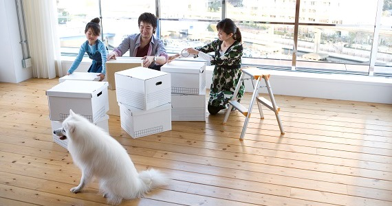 How to Help Your Pet Adjust to a New Home