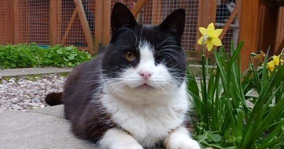 Luvly - Shropshire Cat Rescue