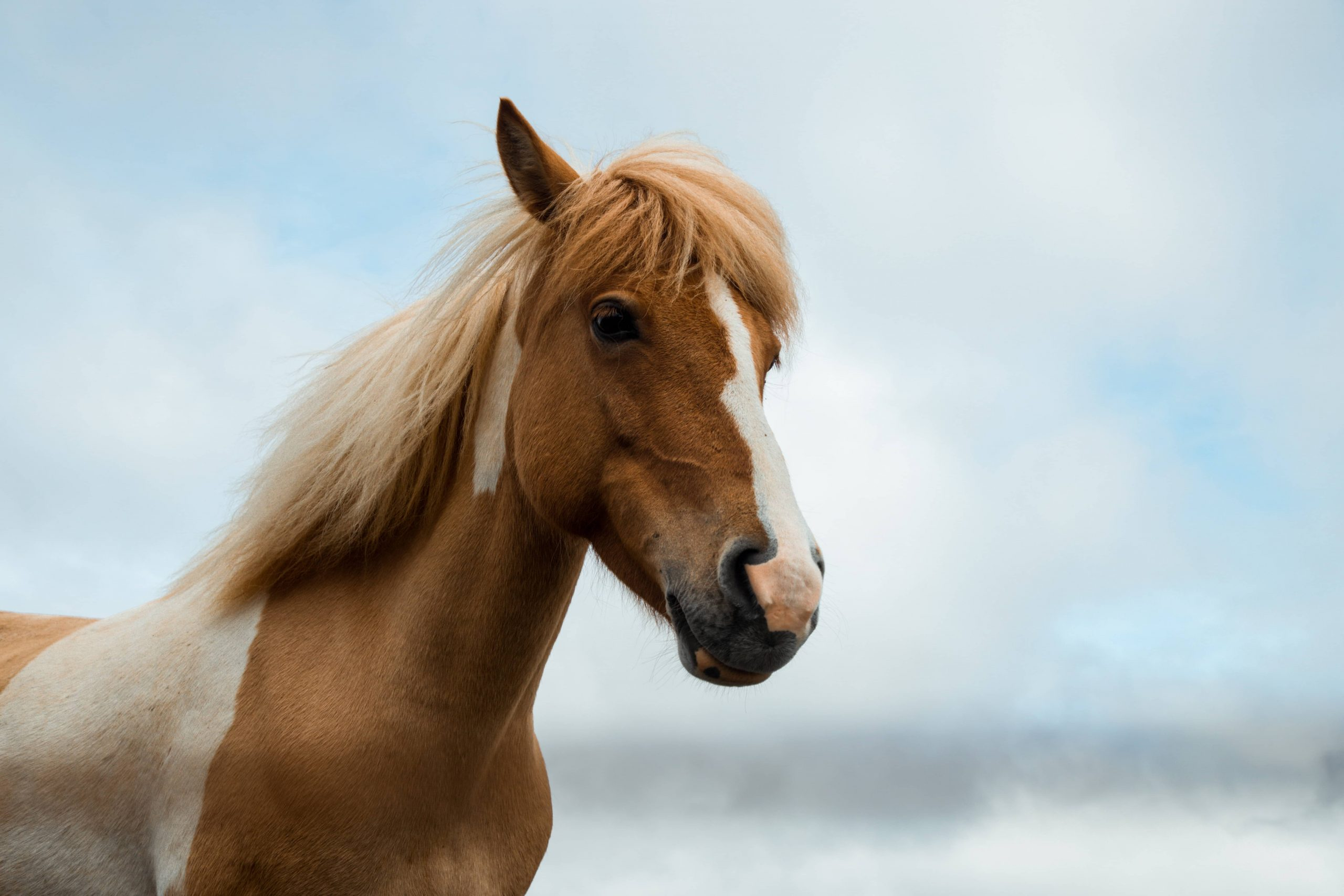 Top 10 tips on keeping horses cool in the summer | Animal Friends Pet  Insurance