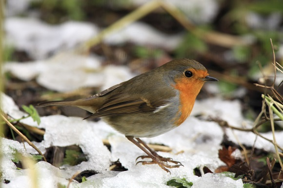 How to Care for Animals in Winter