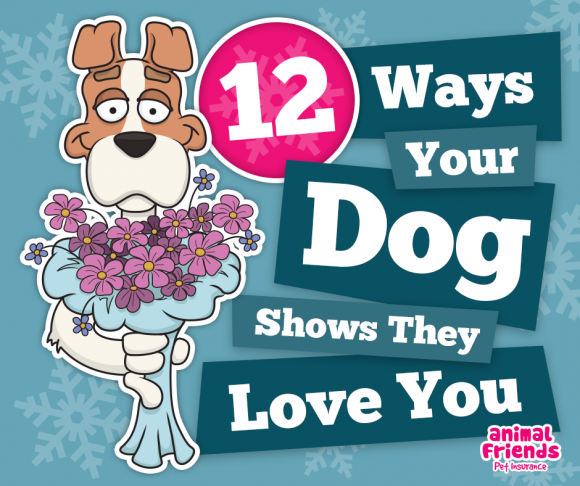 12 Ways Your Dog Shows They Love You