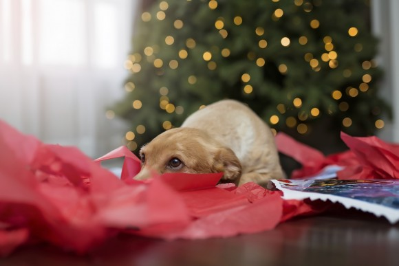 Buying Gifts for Pets