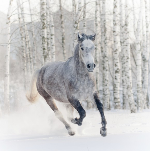 Hints and Tips for Keeping your Horse Healthy this Winter