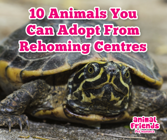 10 Animals you can Adopt from Rehoming Centres