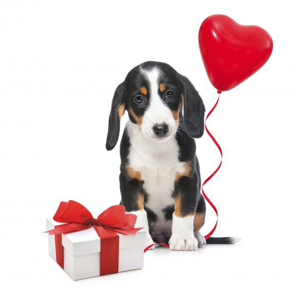 Valentine's Gift Guide for Your Pets