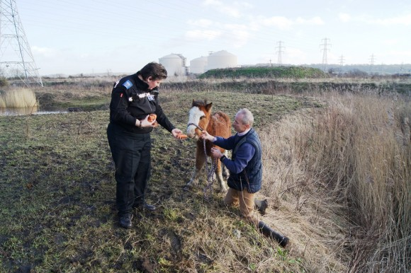 Animal Friends Donates £6,000 to Help Felix the Foal