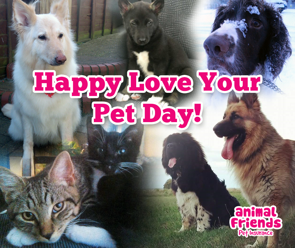 Happy Love Your Pet Day!