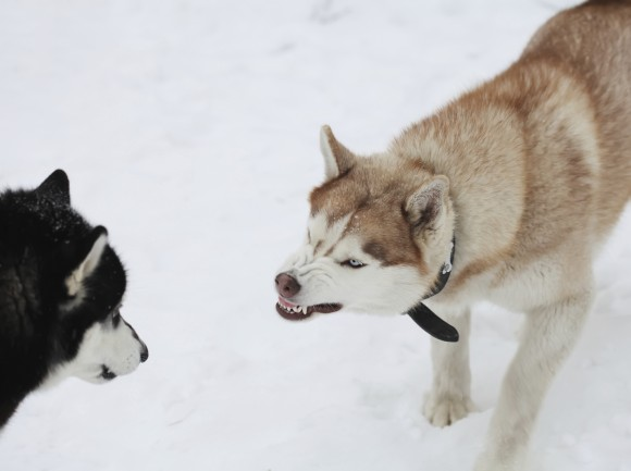 Changing Your Pet's Behaviour: Aggression