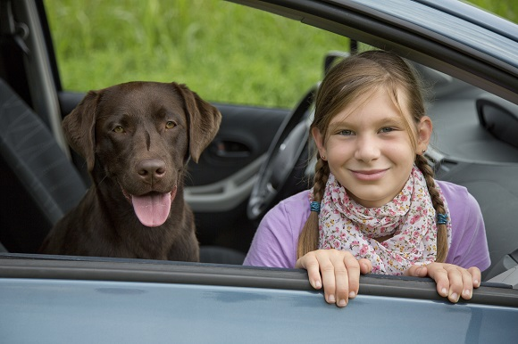 Travelling With Dogs in Cars 1