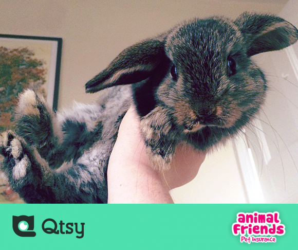 Qtsy App Review - The Pocket Pet Show 2
