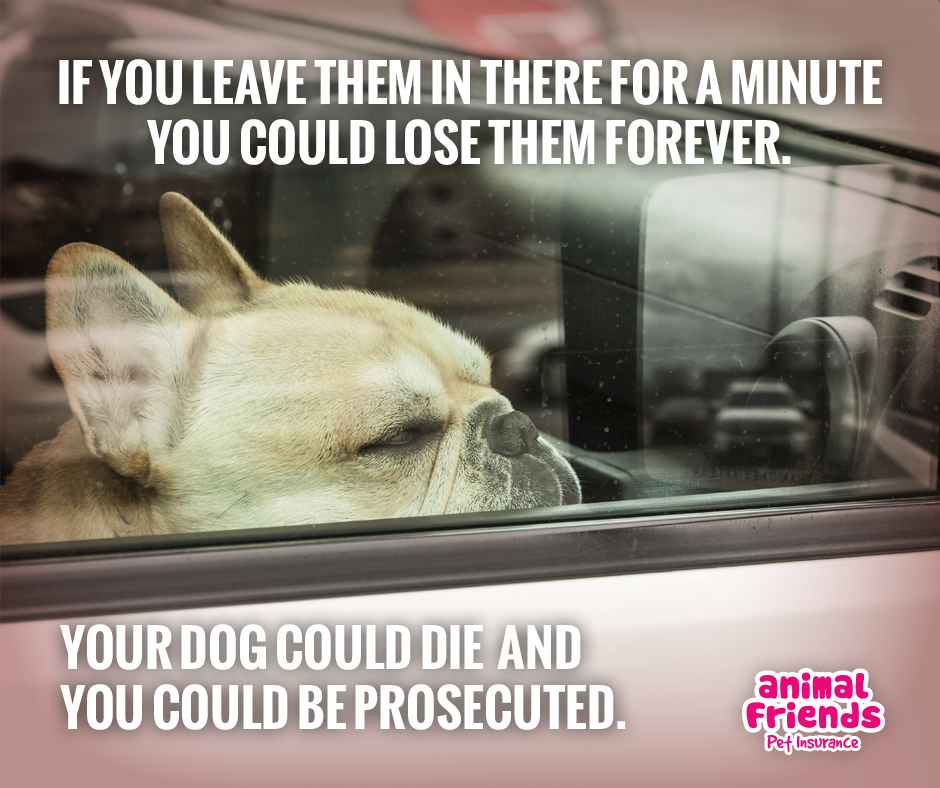 How and Why Are Brachycephalic Dogs Affected When Left Alone in a Car?