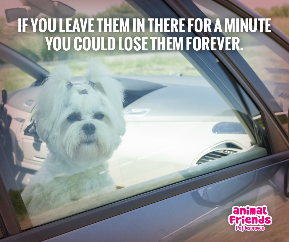 How and Why are Long Haired Dogs are Affected in Hot Cars?