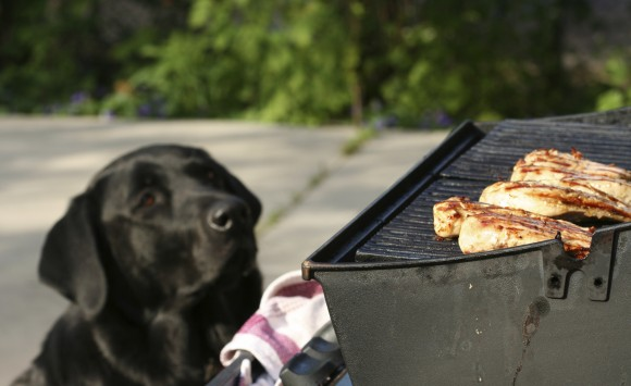 pets and barbecues