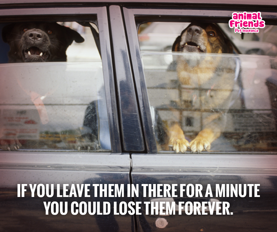How and Why Are Senior Dogs Affected When Left in a Car?