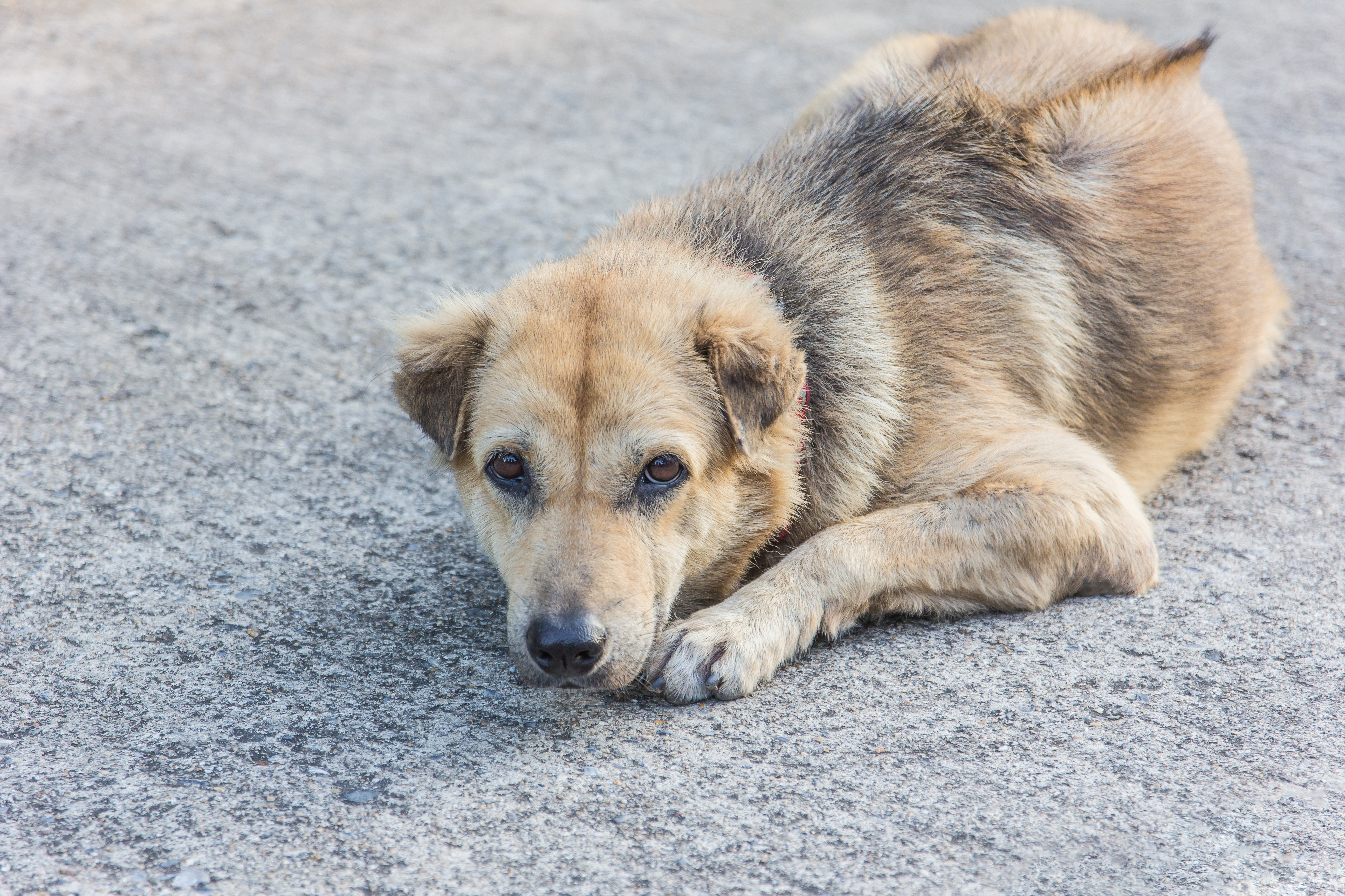 What Happens to Stray Dogs?