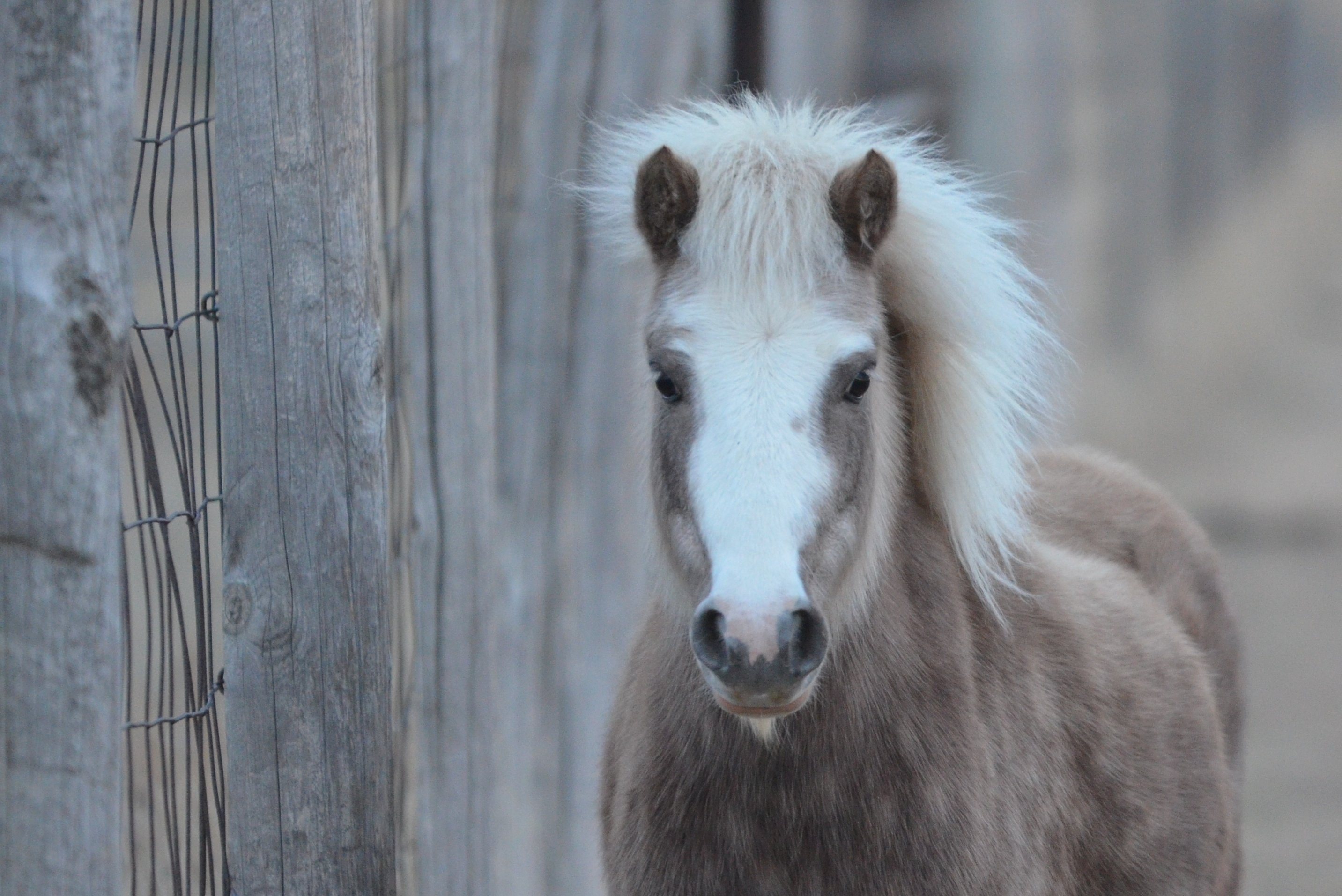 Maintaining a Healthy Horse or Pony