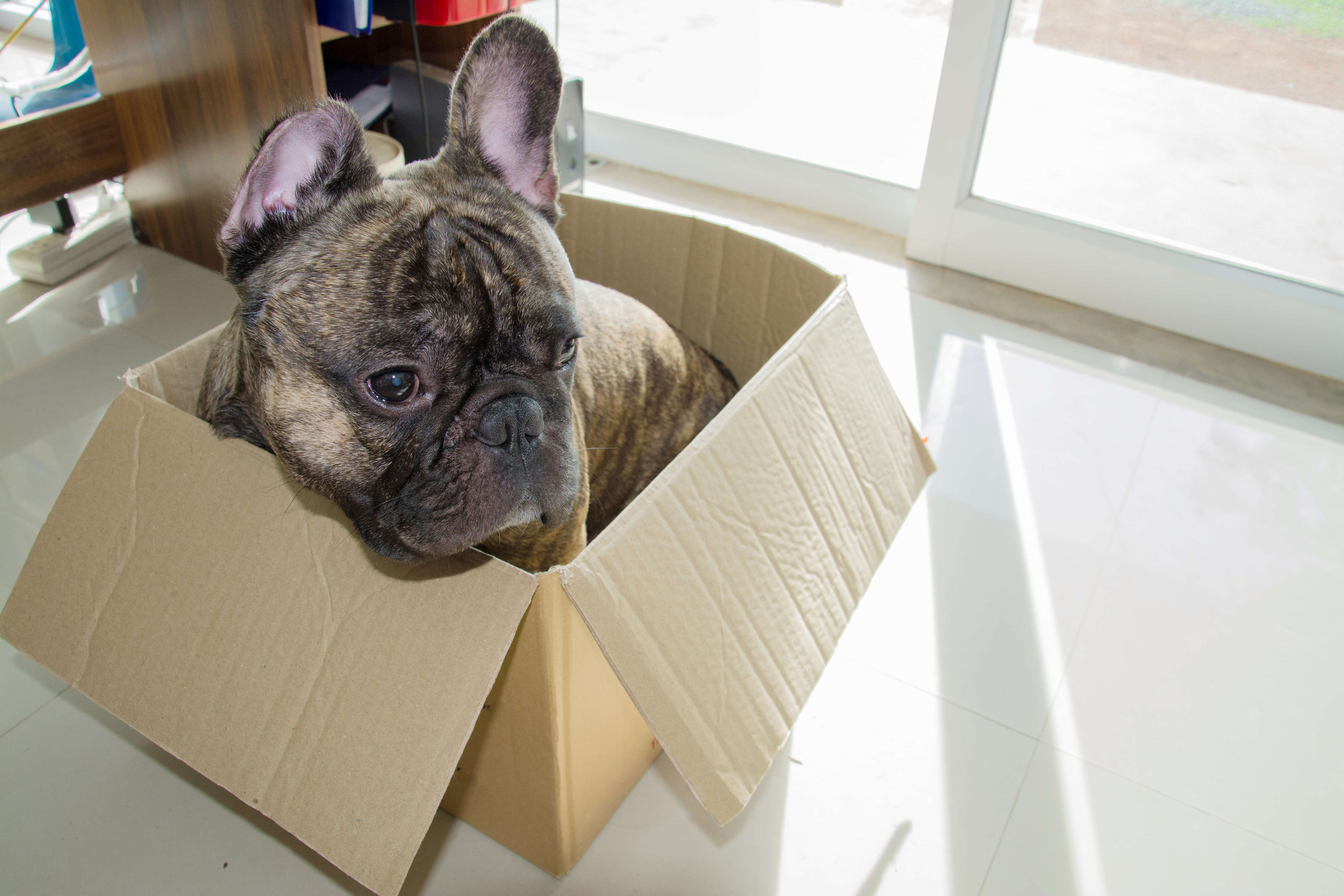 Dog Attacks on Postmen Responsible for a Third of Personal Injury Claims! 1