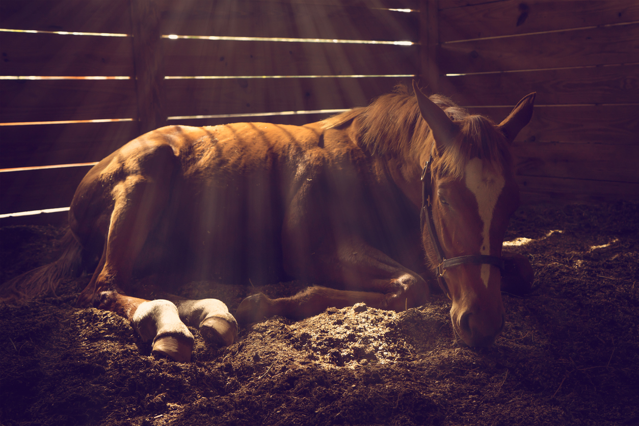Colic in horses - all you need to know