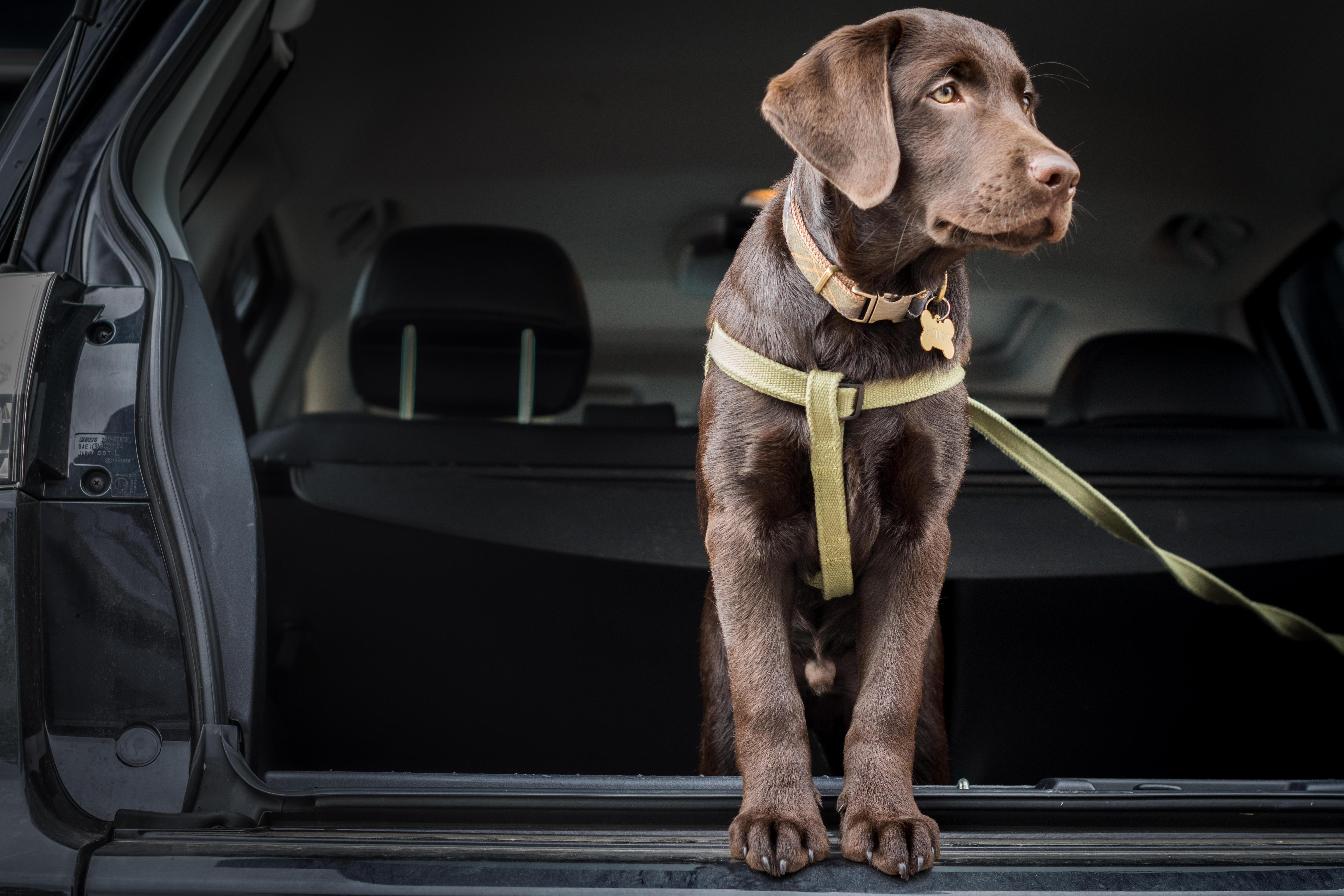 Tips and Tricks for Travelling with Dogs 2