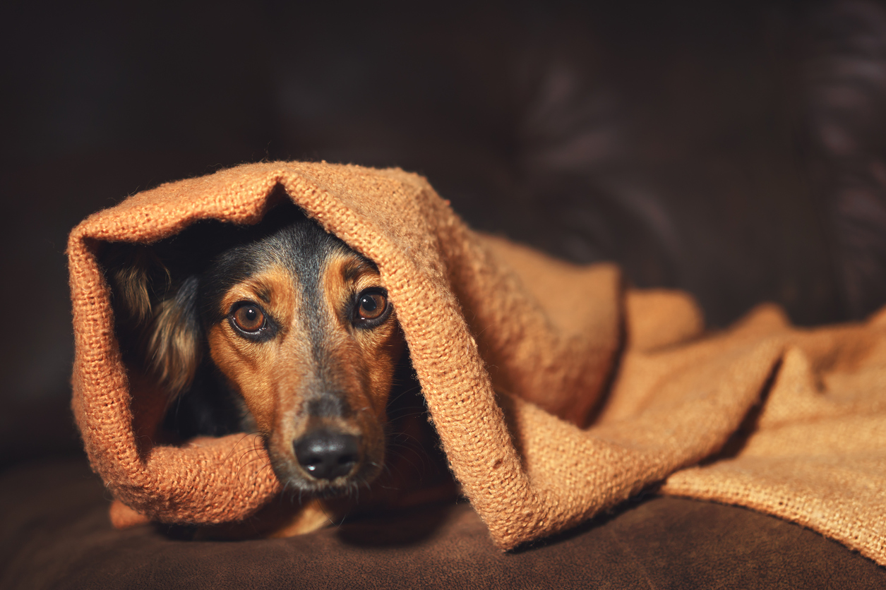 How are you protecting your pet this bonfire night?