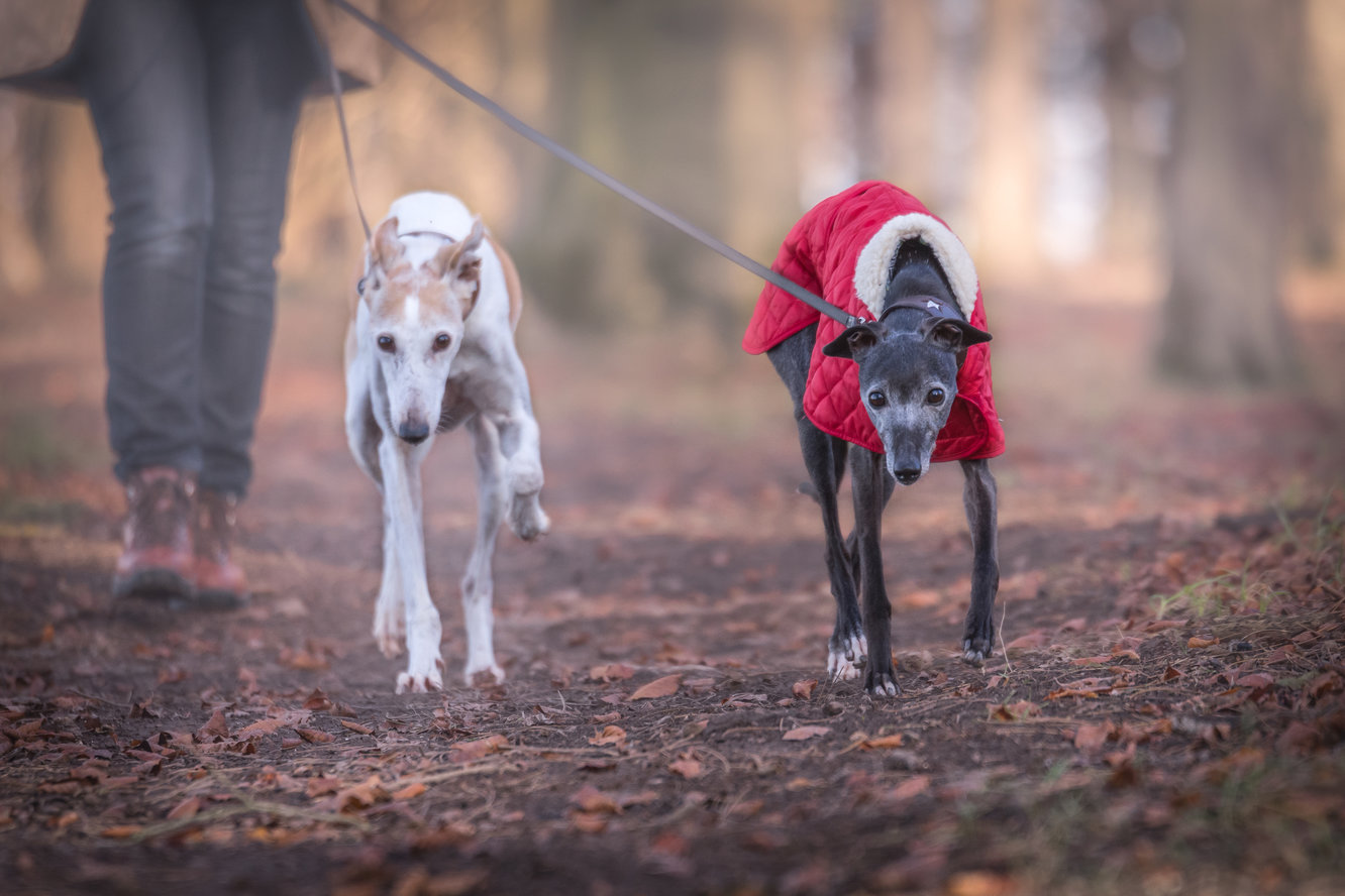 Spending on pets increases, with the over-65s leading the way