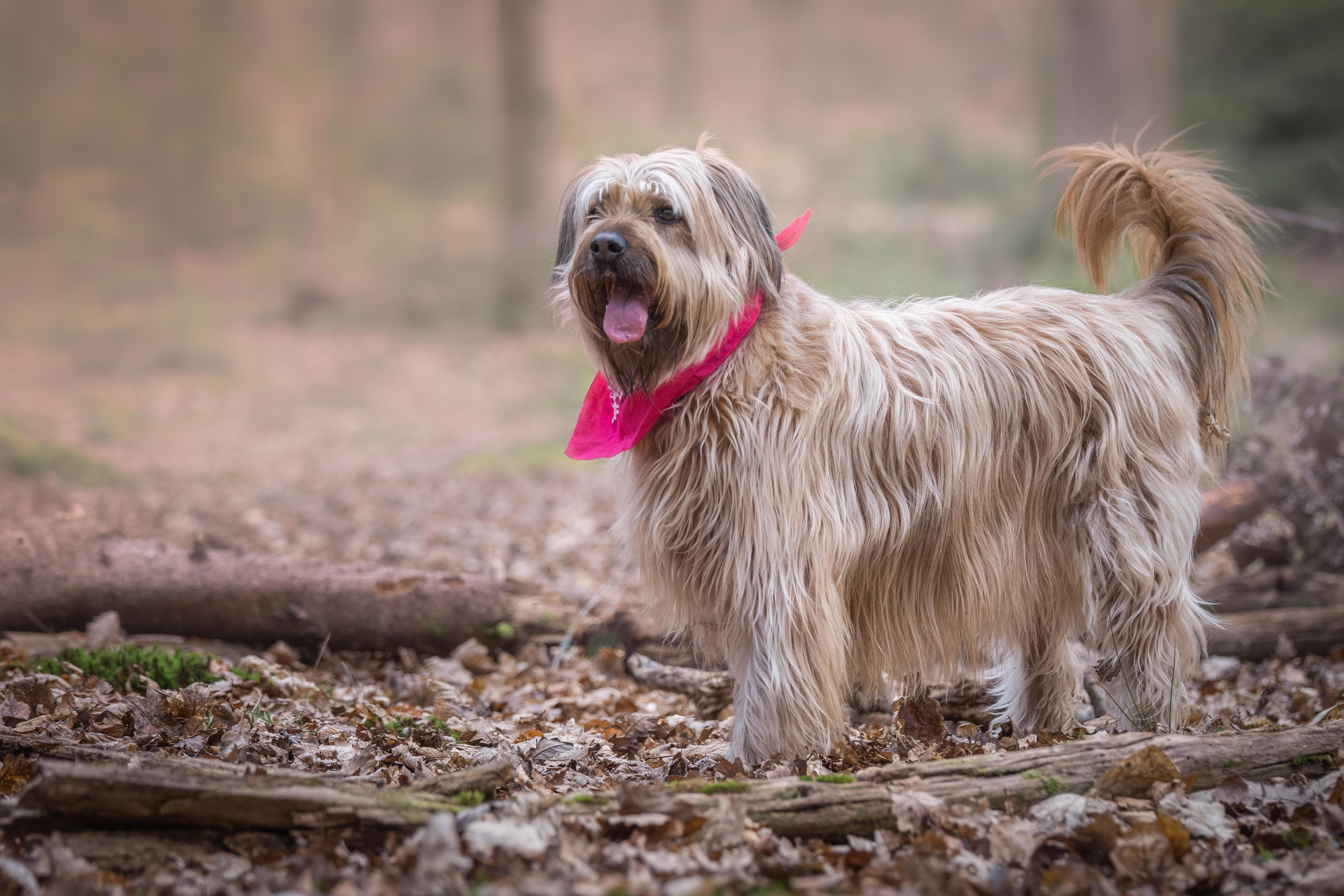 Fun Activities to do in the Outdoors with your Dog