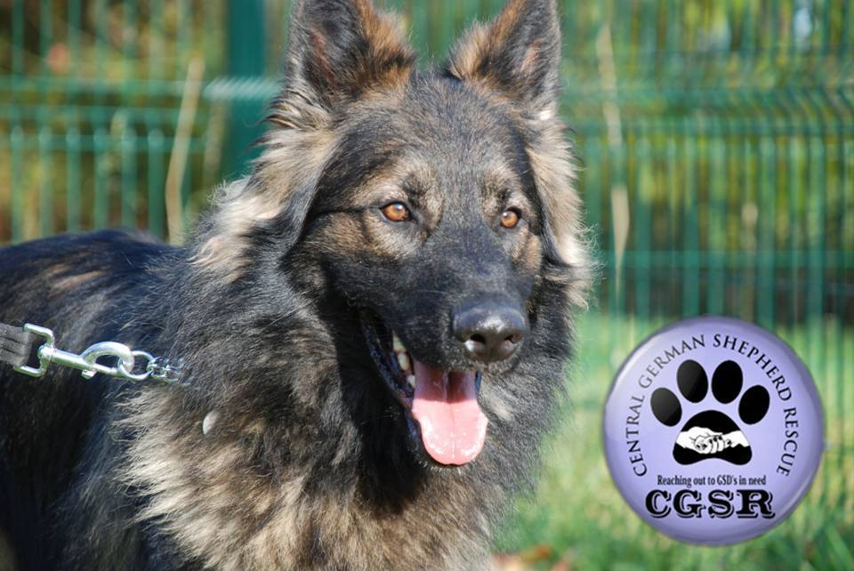 We've donated £5000 to Central German Shepherd Rescue 3
