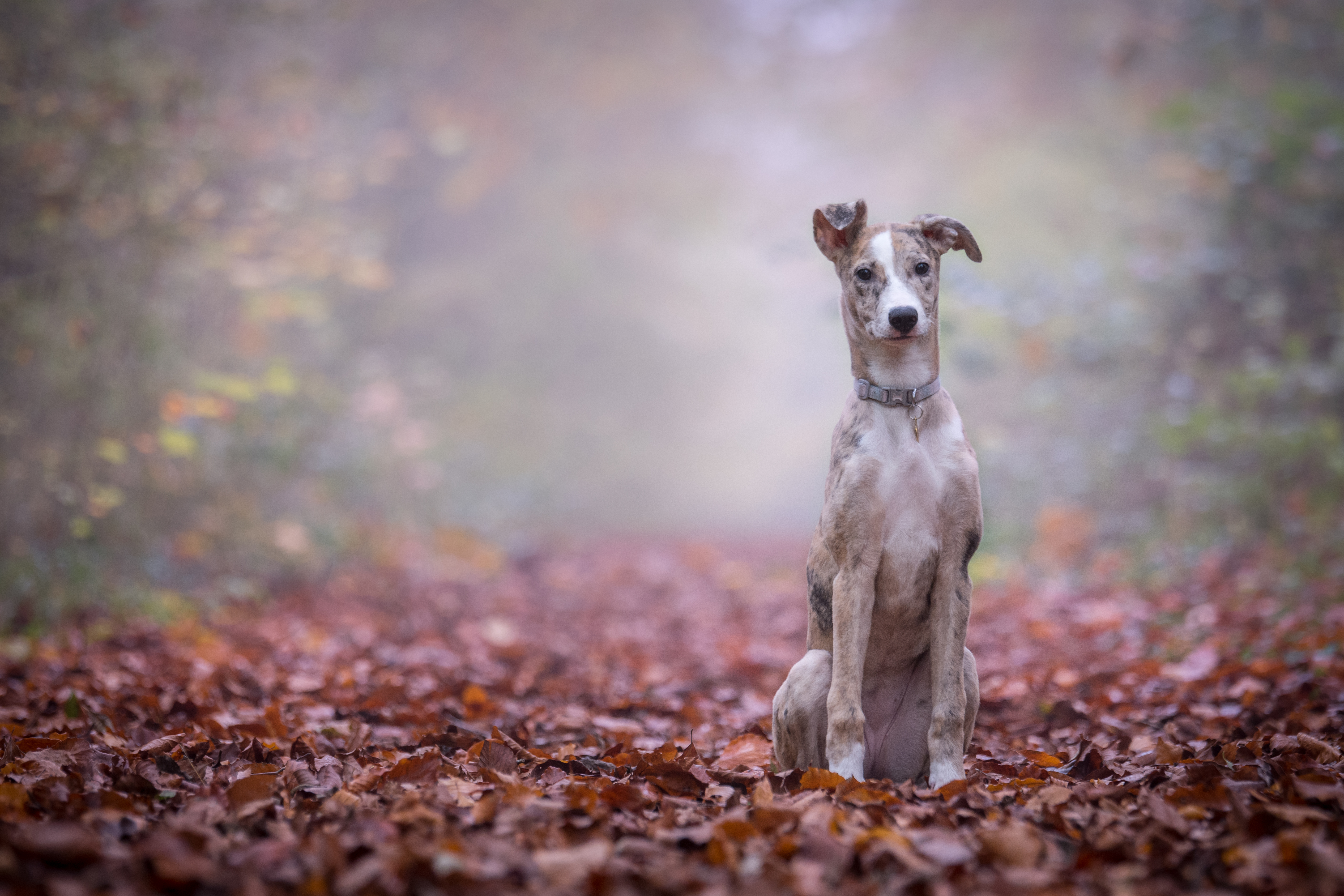 10 Common Problems Dogs Face in Autumn 2