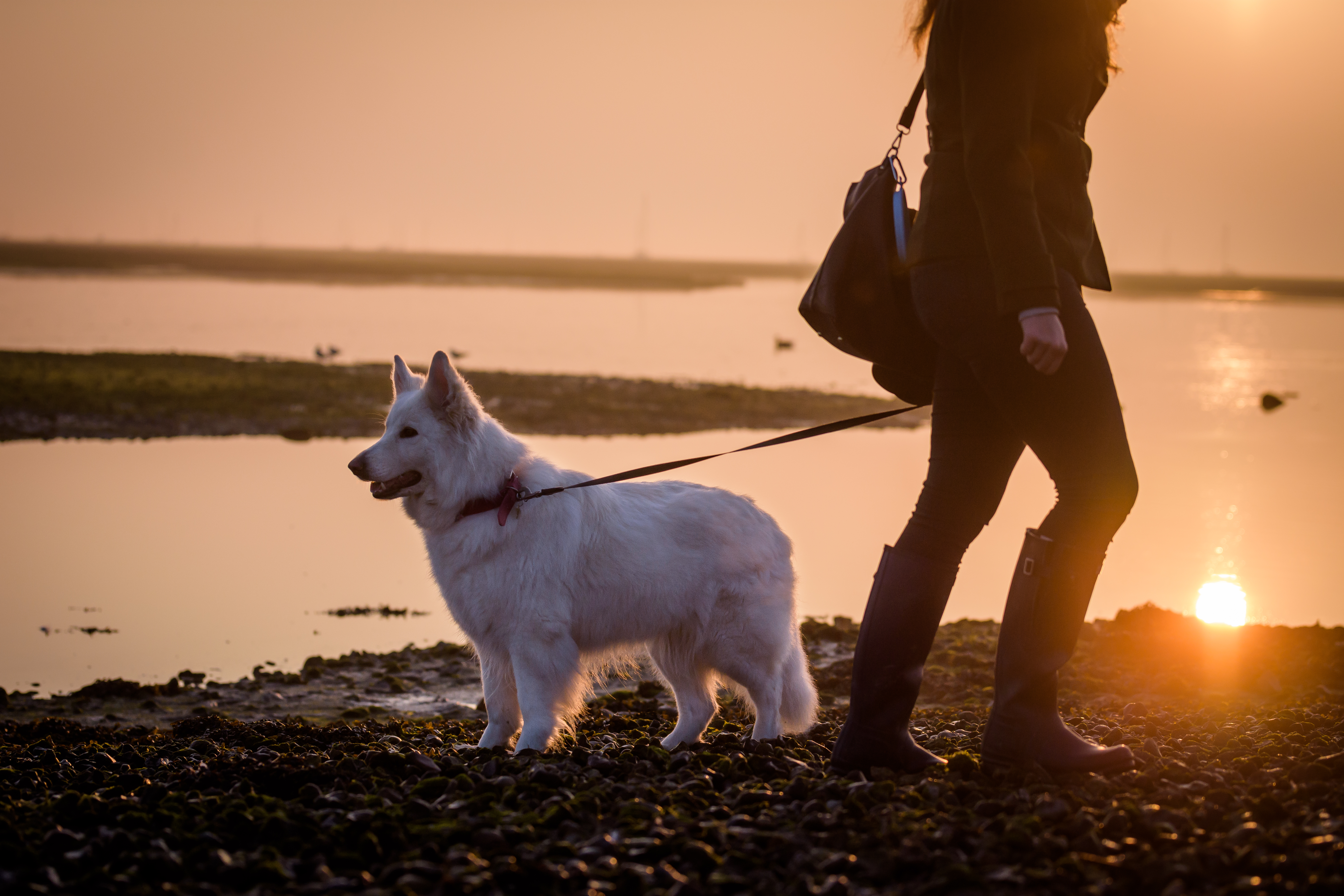 5 things to do with your dog this weekend 2