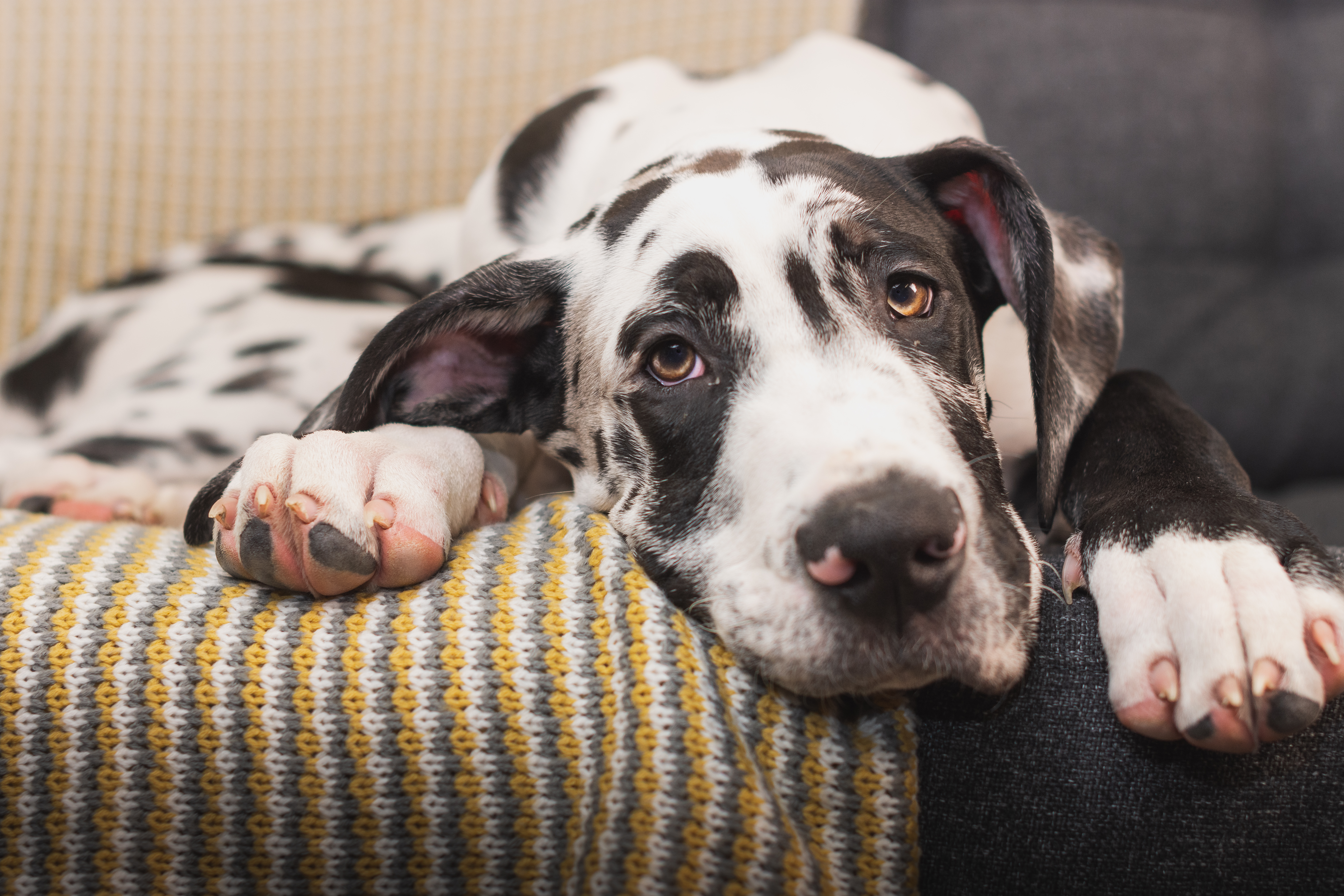 5 easy steps to take to pet-proof your home 1