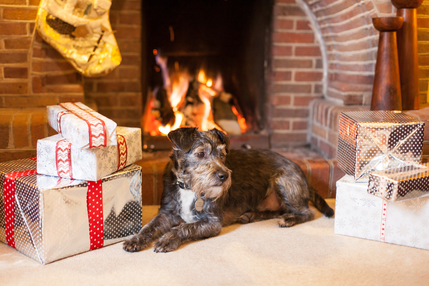 dog by the fire at Christmas