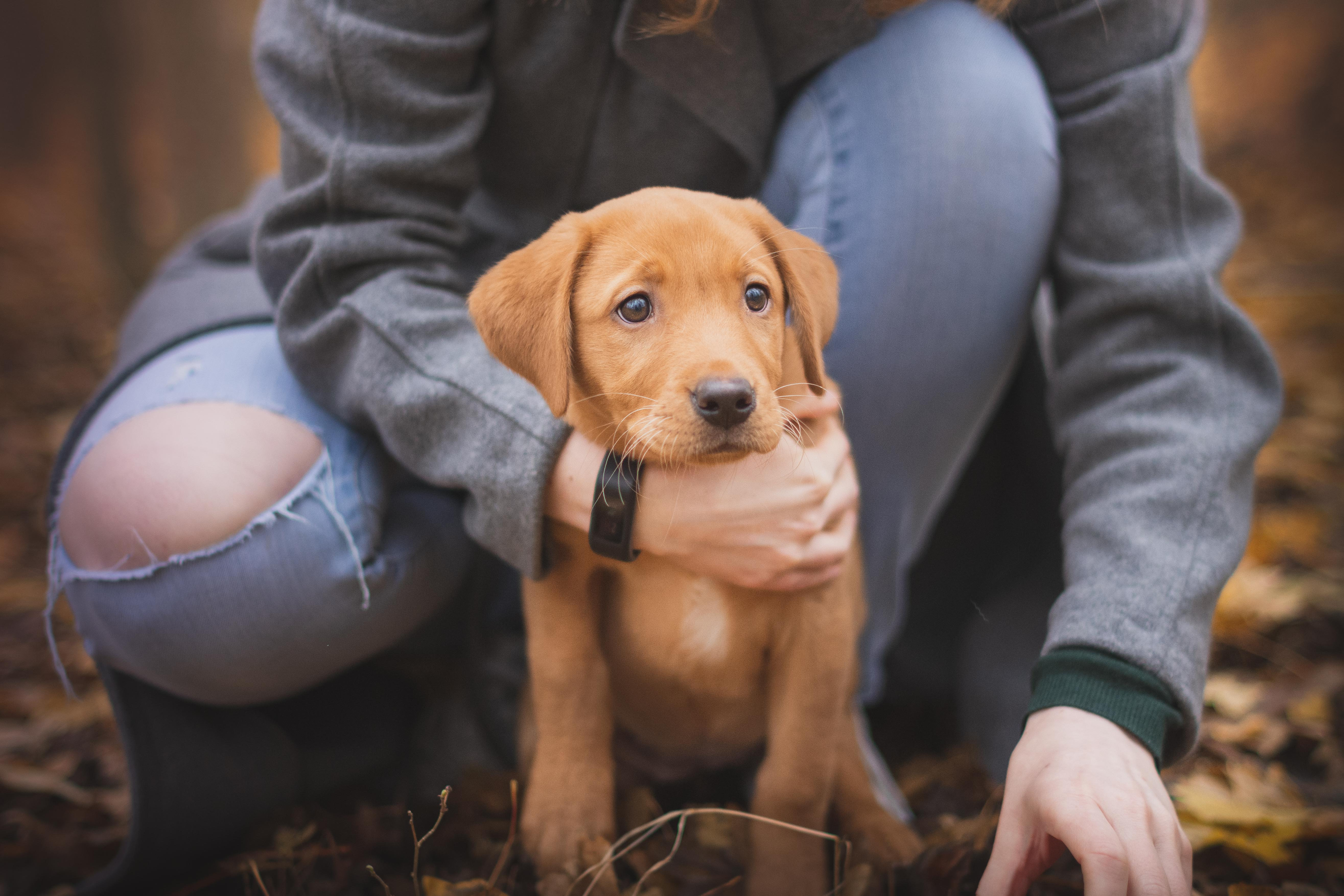 a puppy in the arms of its owner