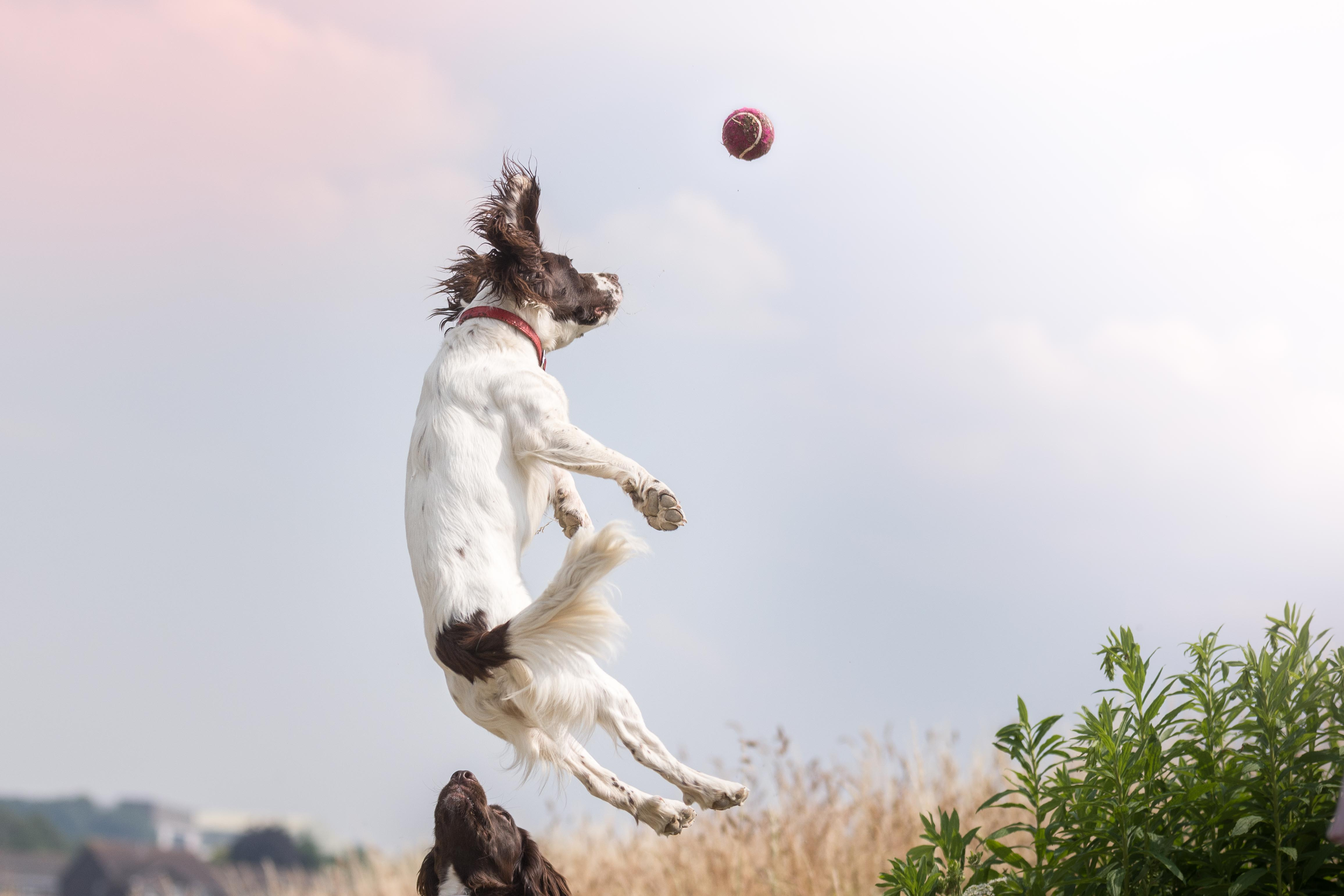 a dog jumping in the air