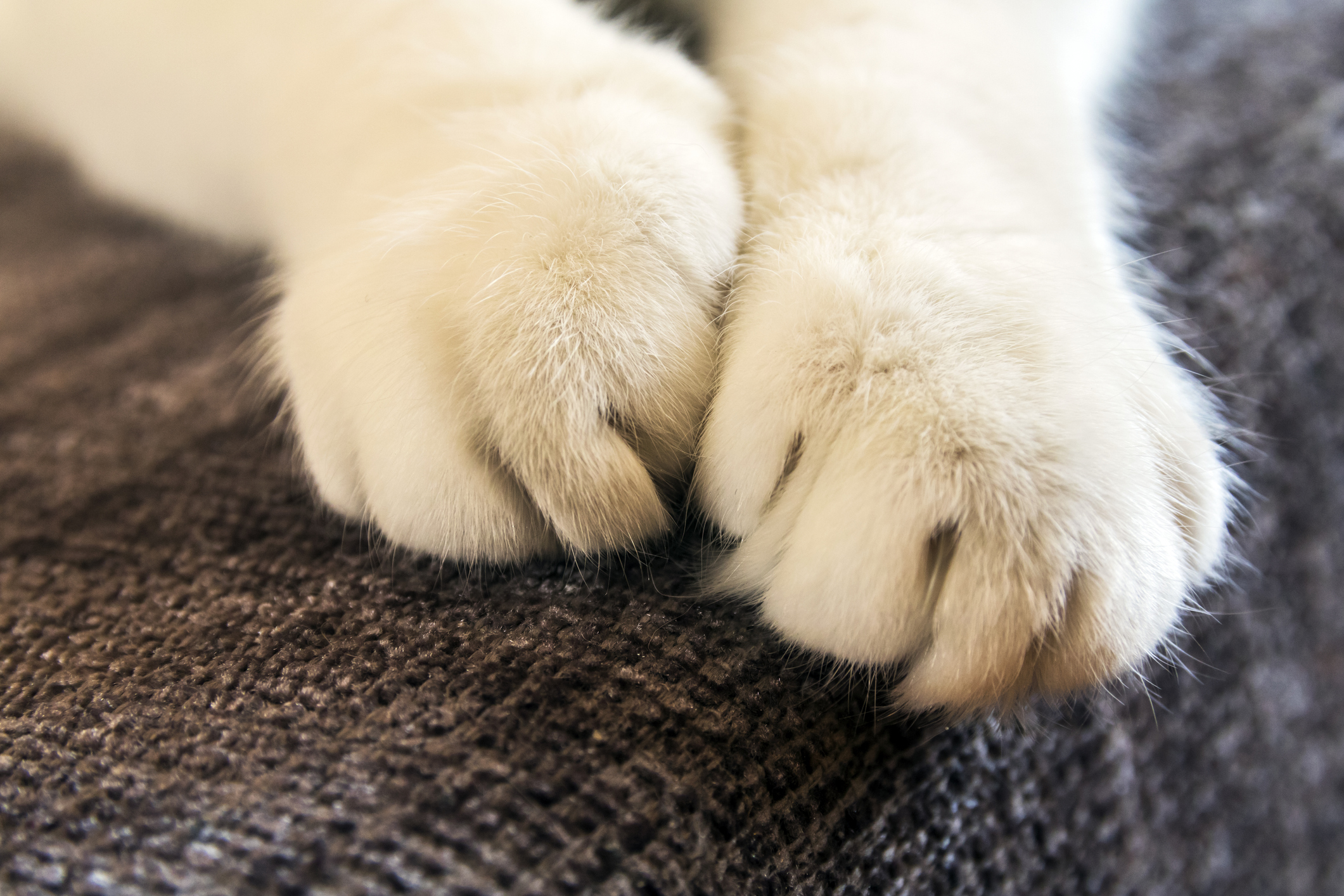 a cat's paws with nails