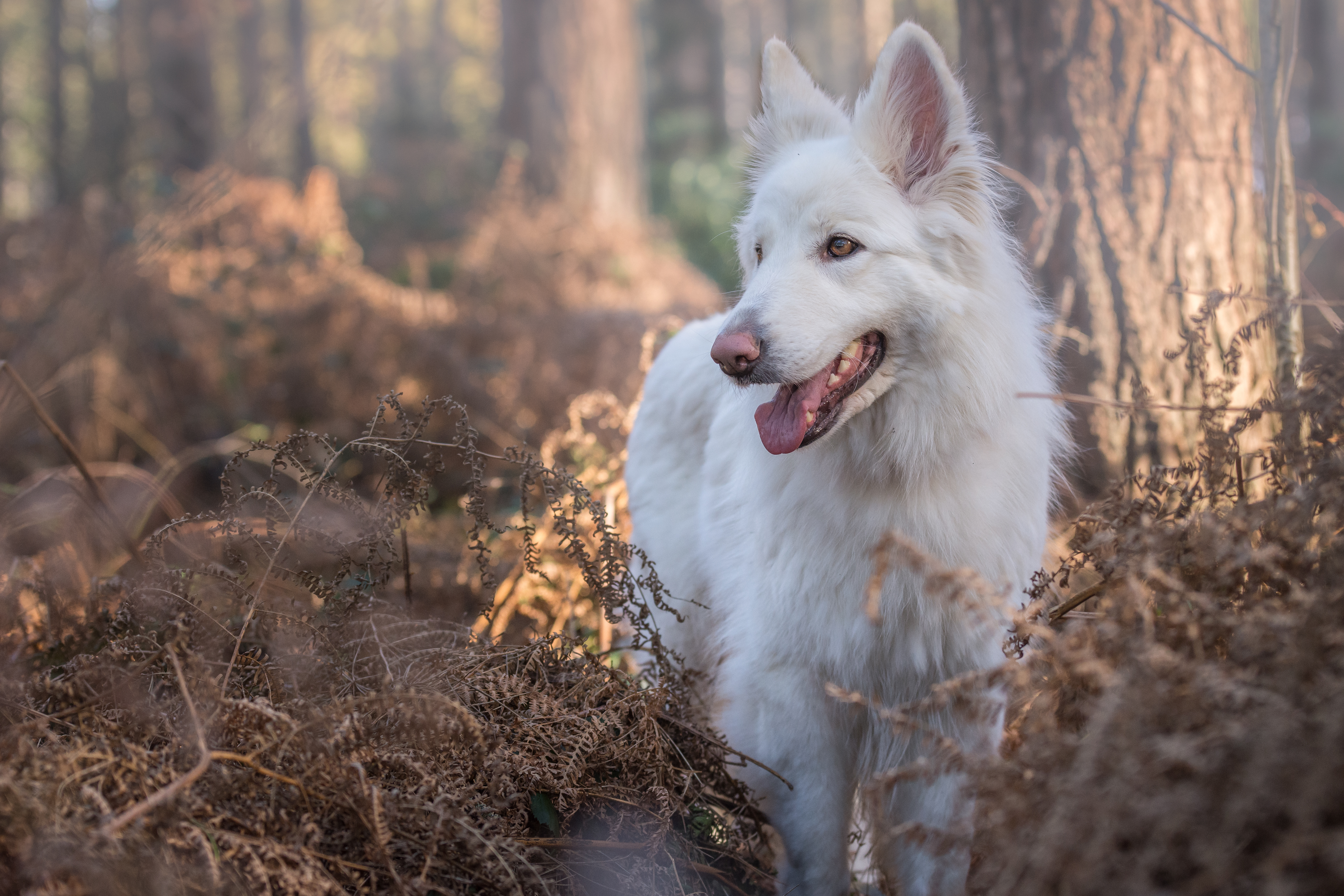 a large white dog in the forest