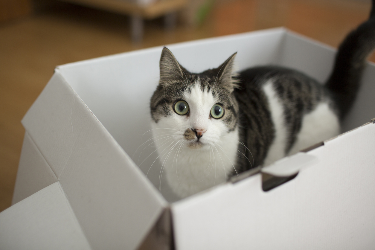 Why do cats love cardboard boxes and other quirks?