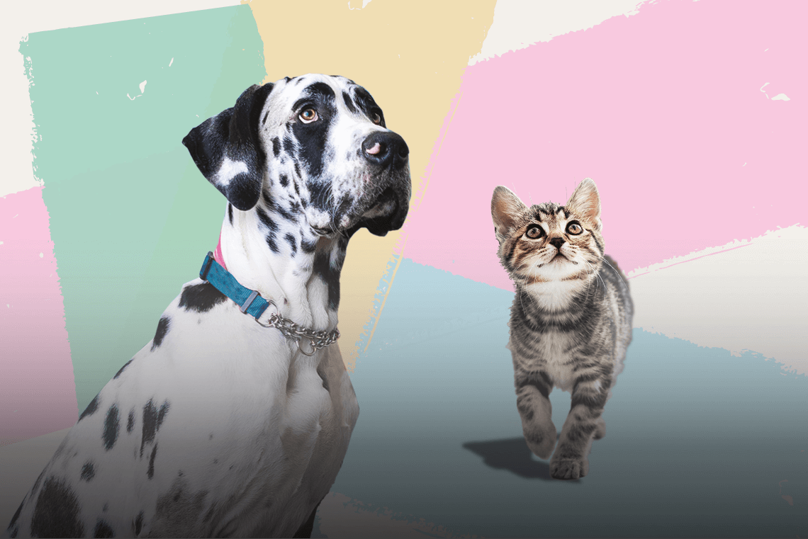 Animal Friends Insurance announces partnership with Aviva to provide pet insurance 2