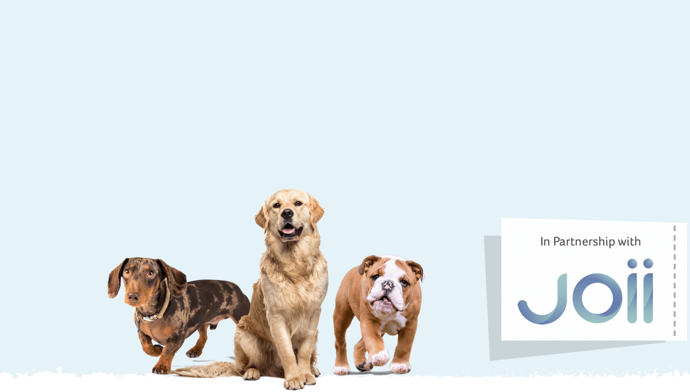 Dog breed health guide