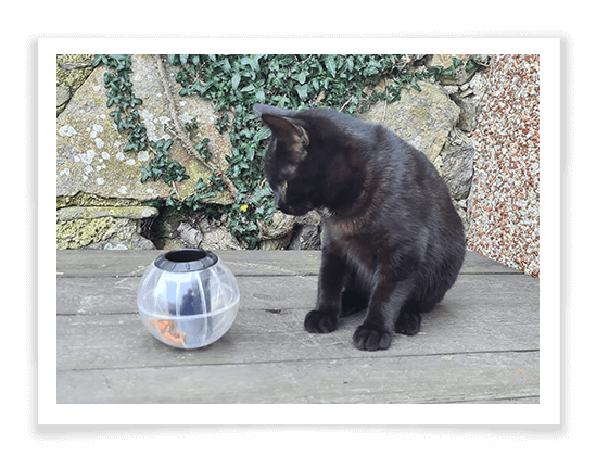 Buster Catrine Treat Ball Review 3