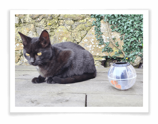 Buster Catrine Treat Ball Review
