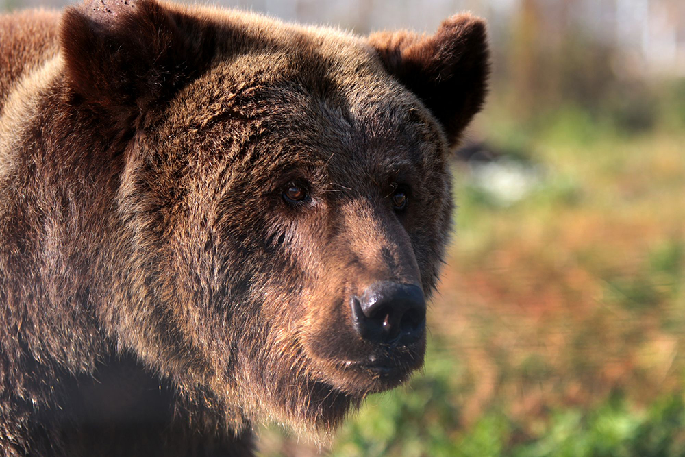 FOUR PAWS: bear rehabilitation process 1