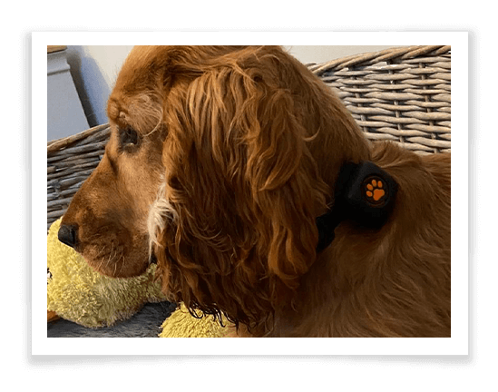 PitPat Dog Activity Monitor Product Review 4