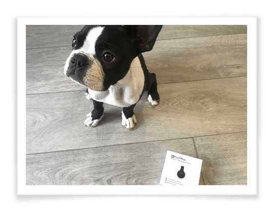 Pooch Play product review 3