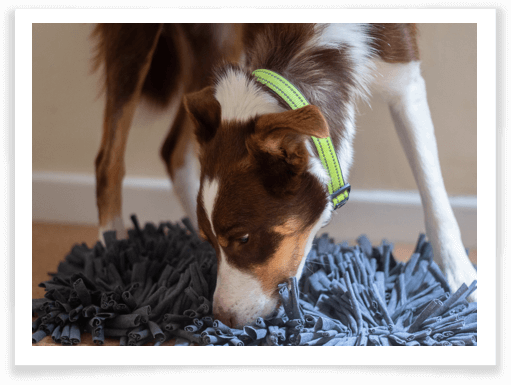 Zicosy Snuffle Mat review 1