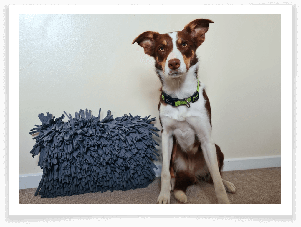 Zicosy Snuffle Mat review 2