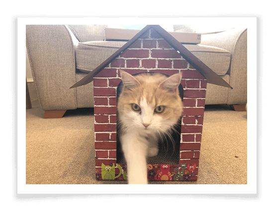 Cat Scratching Cardboard House Product Review 1