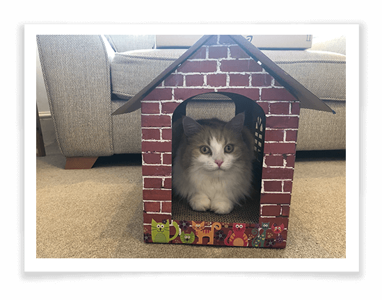 Cat Scratching Cardboard House Product Review 2