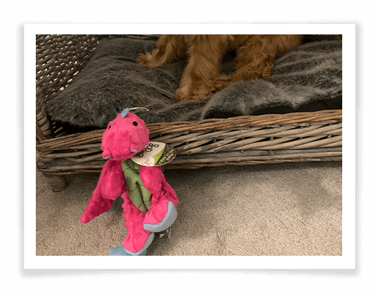 GoDog Dragon Dog Toy Product Review 2